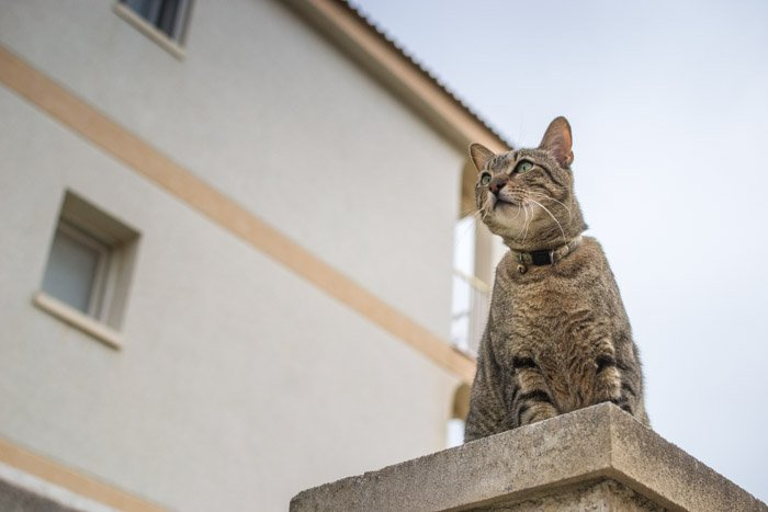 photograph of a cute brown tabby cat sitting on a wall