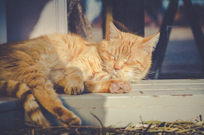 cat photography of a sleepy orange cat