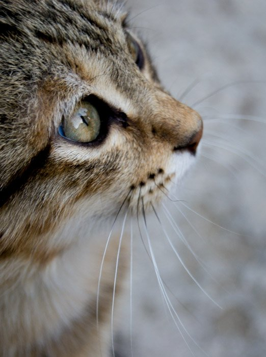 close up cat photography profile of a cat's eyes and nose