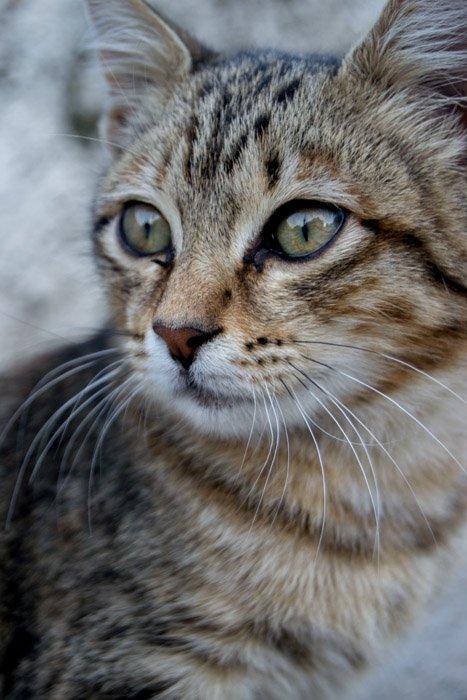 Cute cat photograph