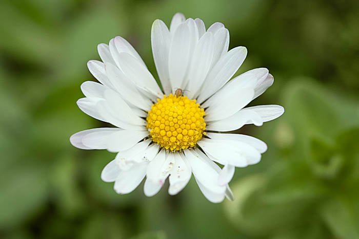 macro photography of a white flower