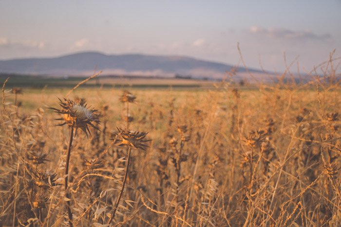 An image of a field in a calm countryside location during the golden hours
