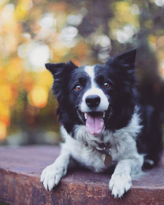 pet photography of a happy dog puppy
