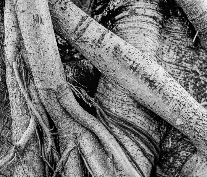 Black and white close up photo of a tree