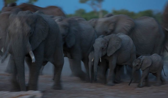 Blurry low key photo of a herd of elephants moving through the landscape. High and low key photography