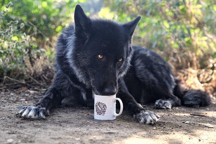 product photography using animals, wolfdog licking the inside of a mug