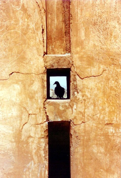 framing composition technique pigeon silhouette