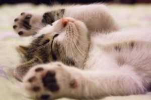 Kitten sleeping with paws in the air