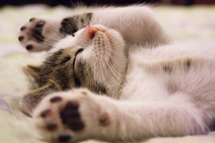 A cute kitten sleeping with paws in the air