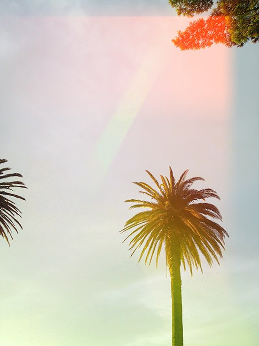 Film photography style photo of a palm tree with light leaks