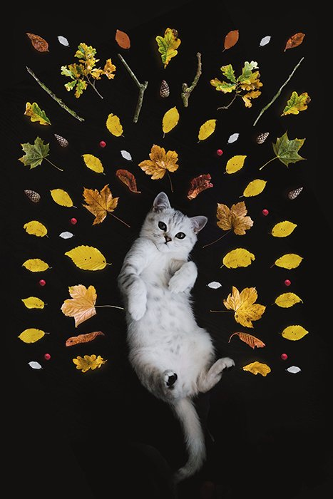 example of using Photoshop for creative pet portraits by adding images of leaves surrounding a white cat on its back