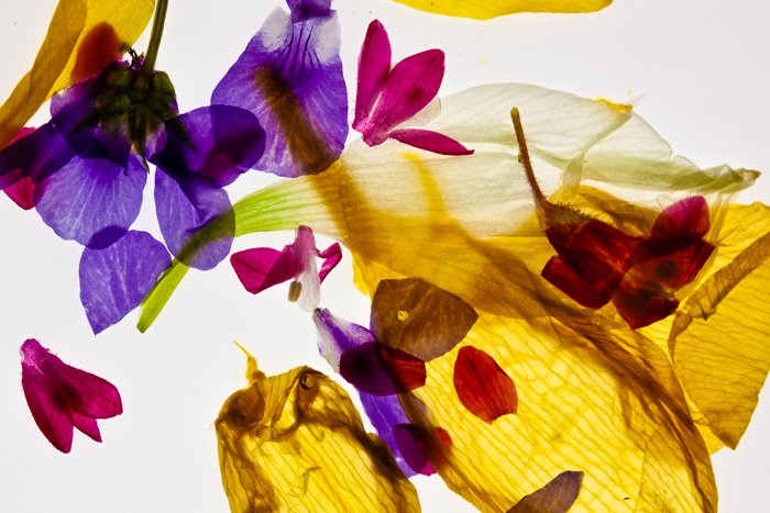 Abstract macro photography of flower petals