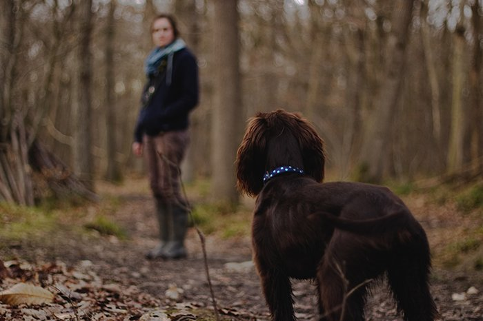 brown dog in a forest looking at a person in the background