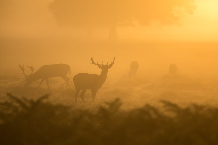 misty photo of a group of deer