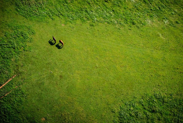 A helicopter wildlife photography shot
