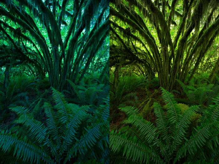 Diptych photo of the same fern edited differently