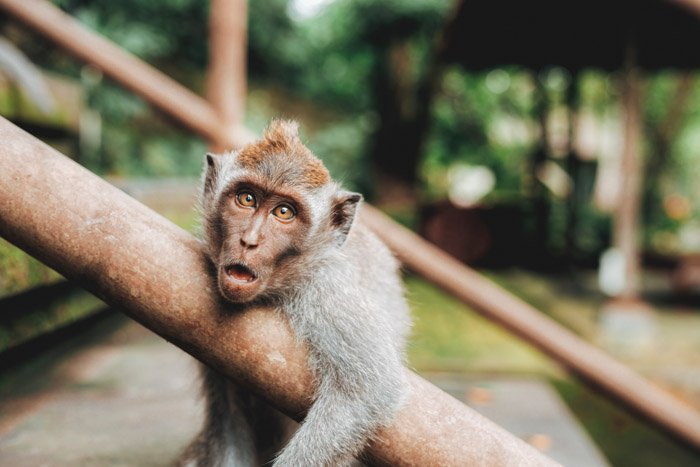 A cute little monkey