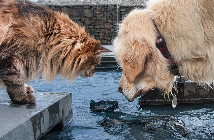 Street photo of a dog and cat looking into water. Creative street photography