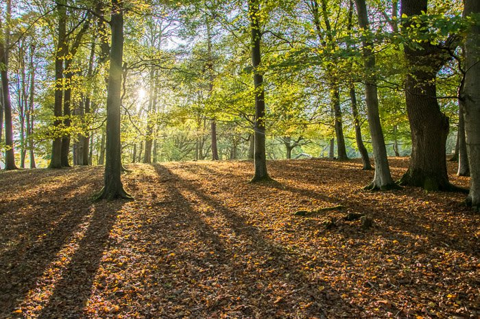 A forest with the sun peaking through the trees leaving long shadows on the ground