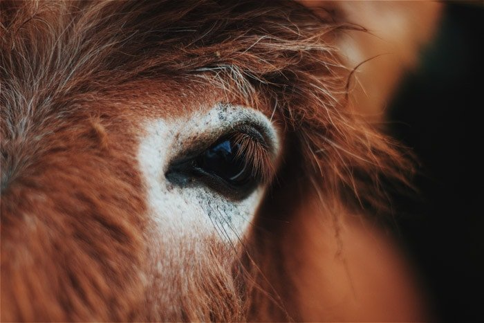 Close up portrait of a brown animal.