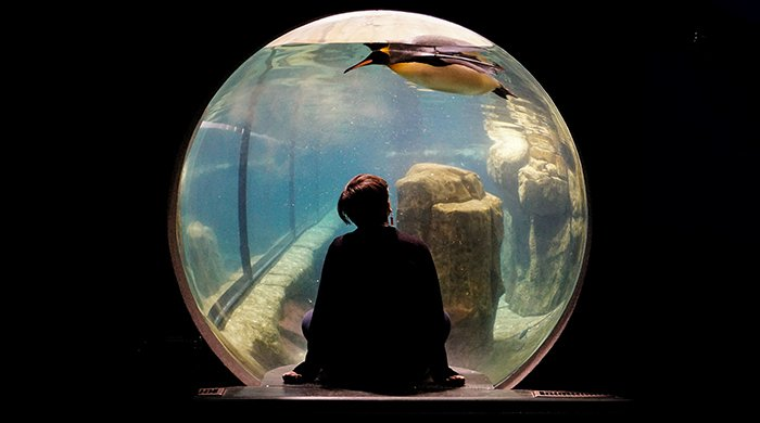 A girl in an aquarium with her back turned to the camera