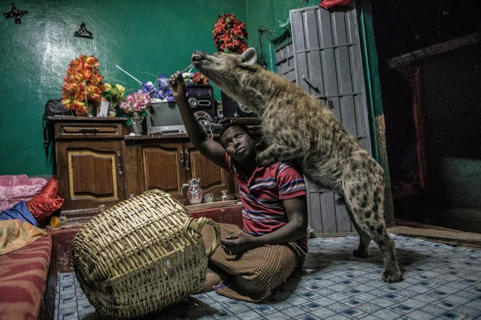 Photo of a man posing with a hyena in an interior setting by Brian Lehmann.