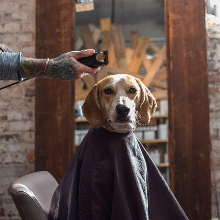 A dog ready for a haircut by Theron Humphrey.