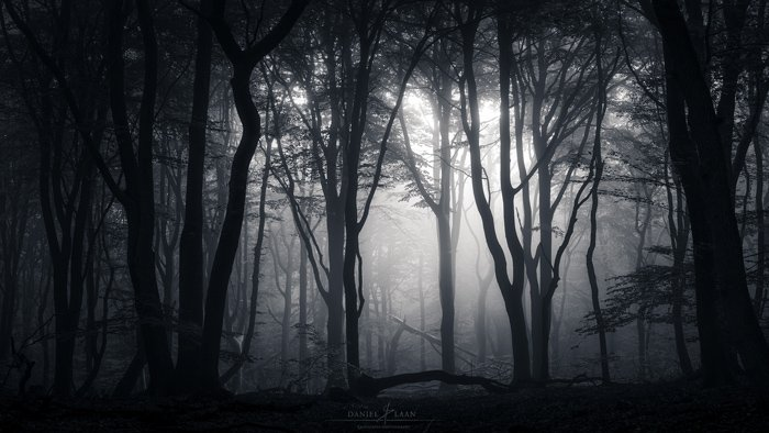 Black and white photograph of a forest. Fine art landscape photography.