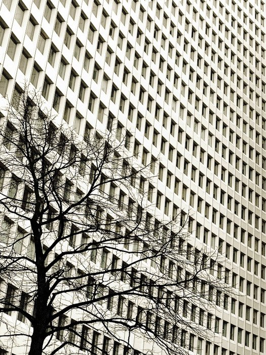 Photo of a multi windowed building with very clear-cut lines and perfectly repeated rectangles juxtaposed with the bumpy curves of the tree