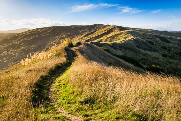 A bright grassy landscape on a bright day demonstrating leading lines in landscape photography composition