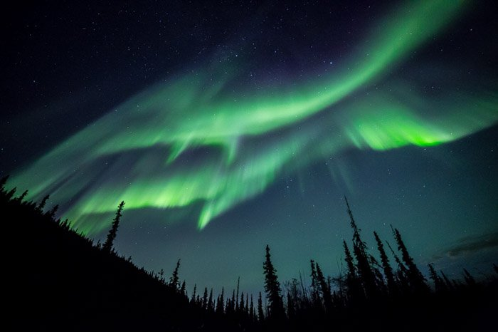 Breathtaking shot of northern lights and starry sky above silhouettes of trees.