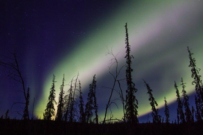 Image of the aurora borealis over silhouettes of foliage.