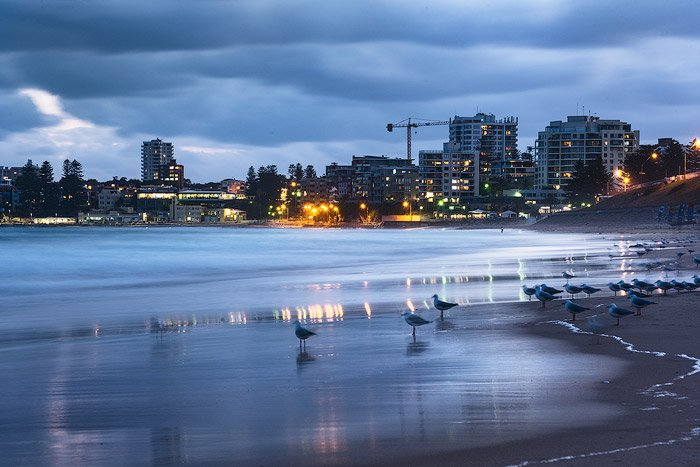 Evening seascape with a flock of seagulls near the shore, a cityscape in the background reflected in the sea.