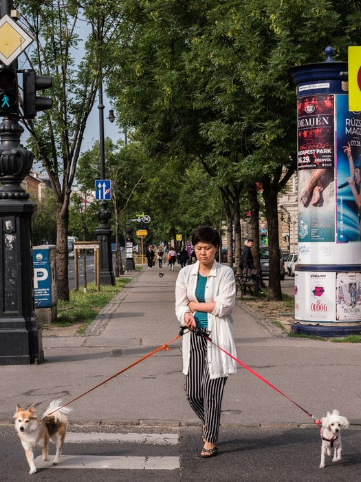 Street photography of a woman walking two dogs in Budapest, taken with a Panasonic gh5 by Craig Hull