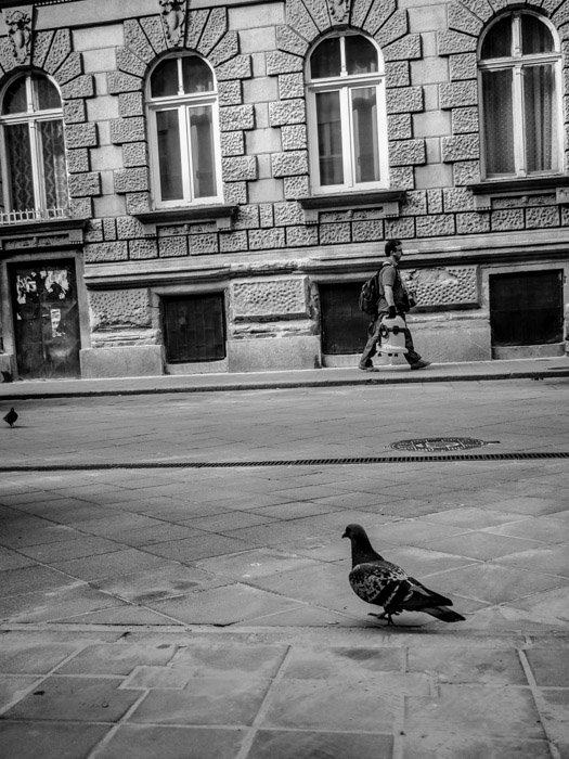 Black and white street photography of a man walking down the street with a pigeon in the foreground in Budapest, taken with a Panasonic gh5 by Craig Hull
