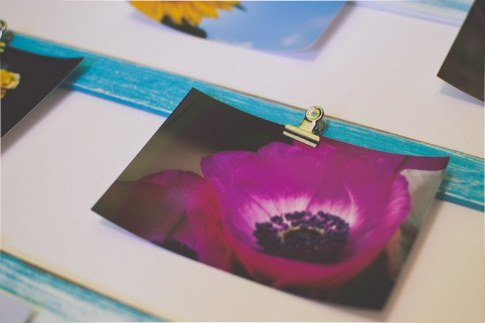A photo of a purple flower attached to a green board with a bulldog clip. Unique photo gifts ideas.