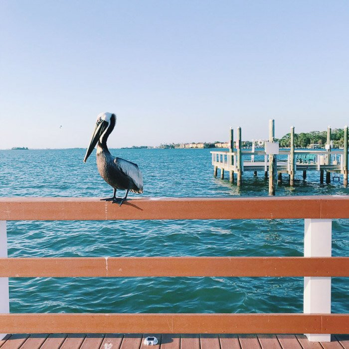 Smartphone photo of a pelican perched on a wooden fence against a seascape background.