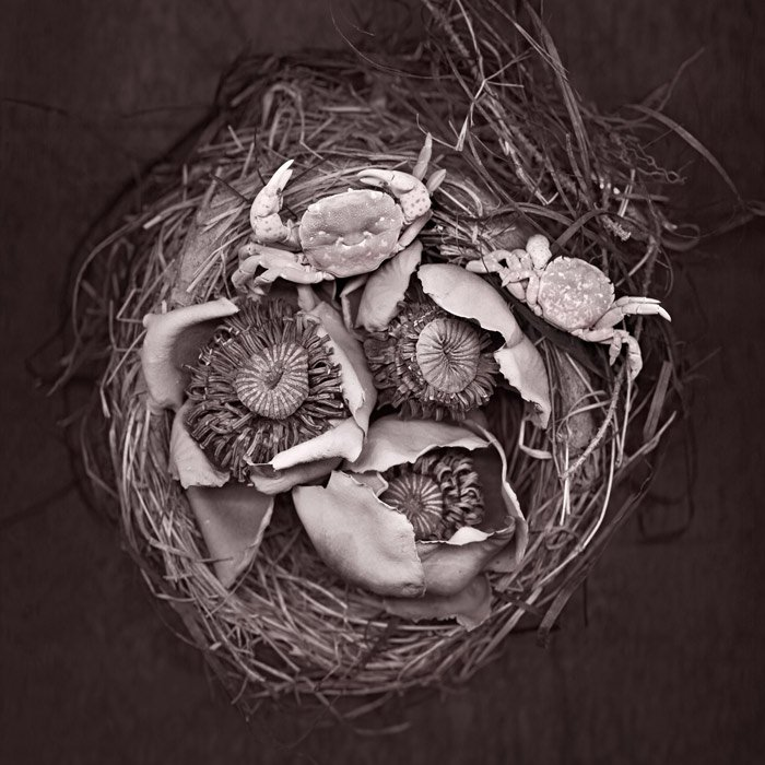 """""""Nest Crabs""""- a still still of crabs and flowers arranged in a nest and scanned"""