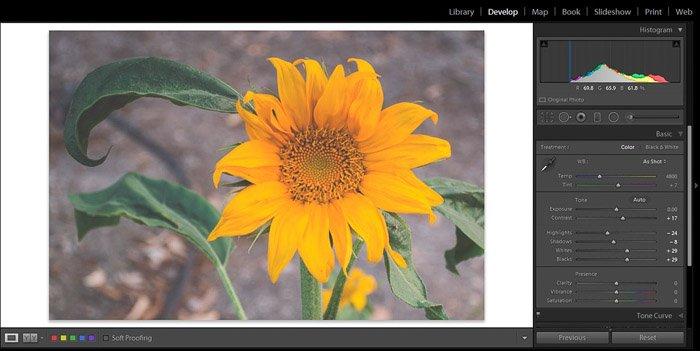 Screenshot of Adobe Lightroom editing flower photography