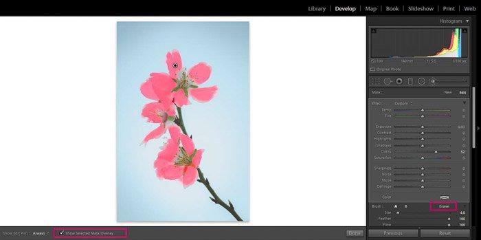 Screenshot of Adobe Lightroom editing flower photography - Lightroom editing view modes -mask overlay