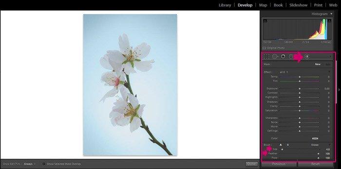 Screenshot of Adobe Lightroom editing flower photography - Lightroom editing view modes -clarity brush
