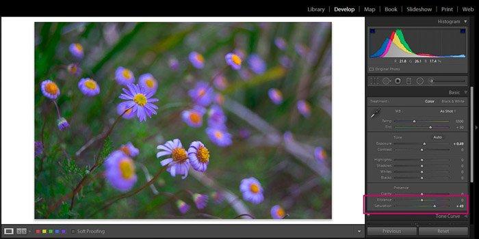Screenshot of Adobe Lightroom editing flower photography - Lightroom editing view modes