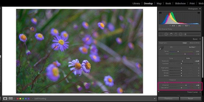 Screenshot of Adobe Lightroom editing flower photography - Lightroom editing vibrance