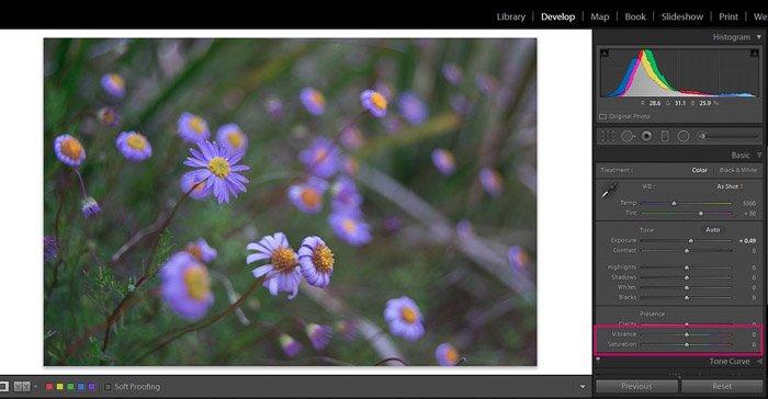 Screenshot of Adobe Lightroom editing flower photography - Lightroom editing tips