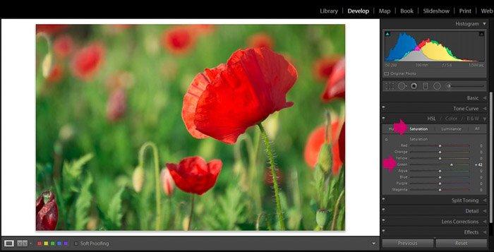 Screenshot of Adobe Lightroom editing flower photography - Lightroom editing tips -saturation