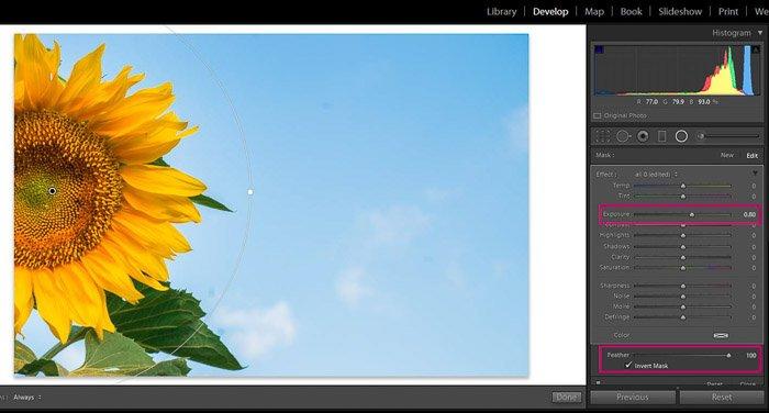 Screenshot of Adobe Lightroom editing flower photography - Radial filter increase exposure on Lightroom