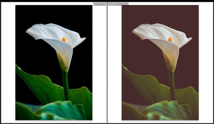Screenshot of Adobe Lightroom split toning before and after shot of editing flower photography