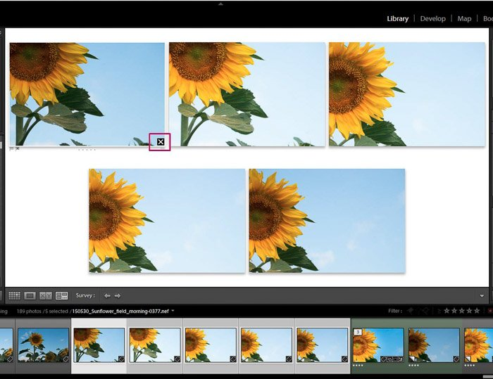 Screenshot of Adobe Lightroom editing flower photography - Lightroom editing view modes deleting