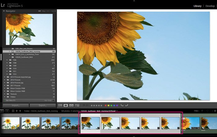 Screenshop of Adobe Lightroom opened on a flower photo - Lightroom editing tips