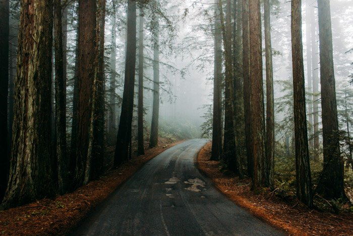 A bleak and atmospheric looking road through a forest